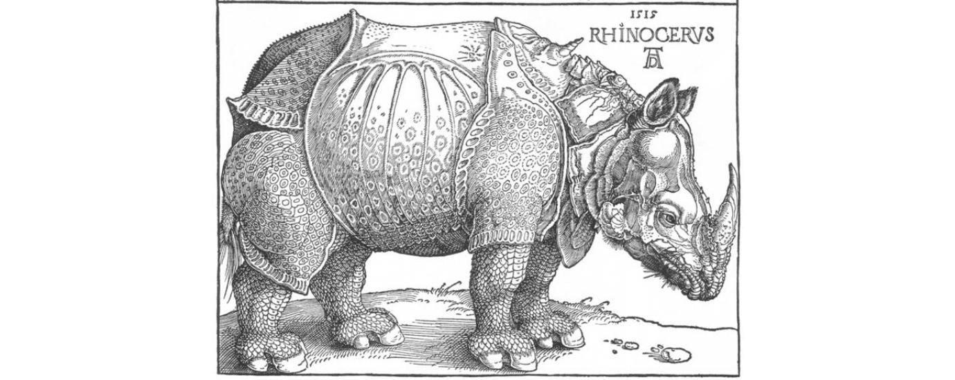 rhinoceros durer